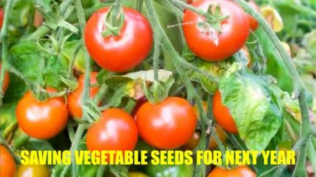 Saving Vegetable Seeds For Next Year